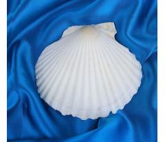 Ракушка декоративная Гребешок, 10-12 см