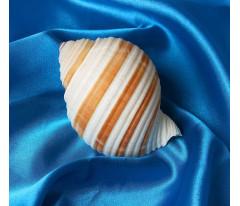 Ракушка декоративная, 9-11 см