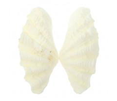 Ракушка декоративная двустворчатая, 8-9 см
